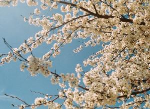 Allergia ai pollini: Come premunirsi?