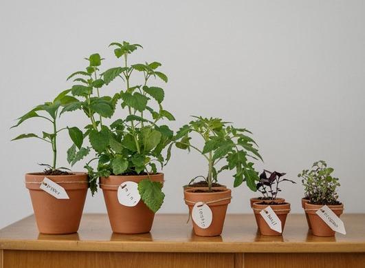 Quali piante usare per alleviare i problemi articolari e muscolari?